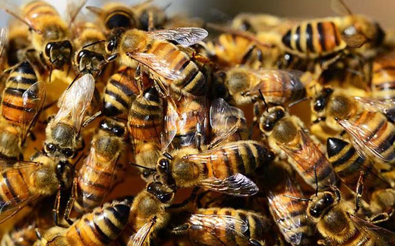 abejas-atacan-a-30-personas-y-obligan-cierre-de-metro-en-venezuela