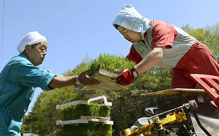 arroz-de-fukushima-pasa-las-pruebas-de-radiacion