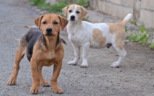 locutor-recomienda-envenenar-a-los-perros