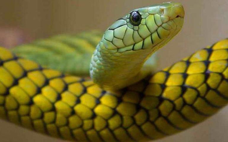 ataques-de-serpientes-crecen-25-en-jalisco