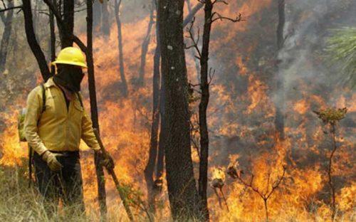 brigadas-comunitarias-combatiran-incendios