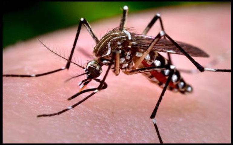 confirman-dos-casos-de-chikungunya-en-morelos