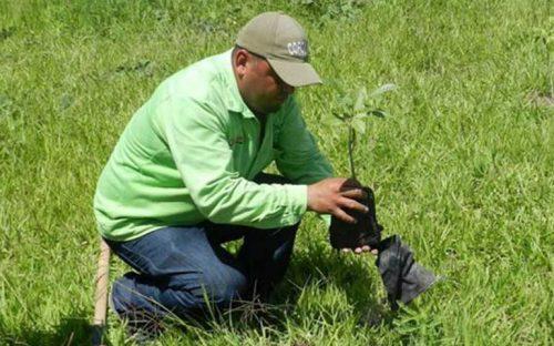 continua-trabajo-de-reforestacion-del-libramiento-de-tepic
