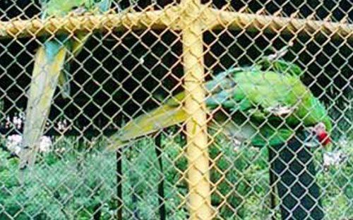 roban-guacamayas-del-aviario-del-parque-la-alameda