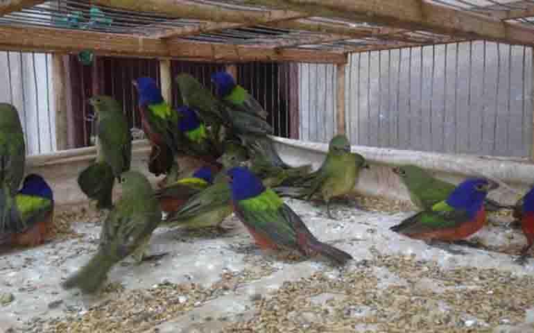 aseguran-en-nayarit-35-aves-exoticas-que-vendian-en-la-via-publica