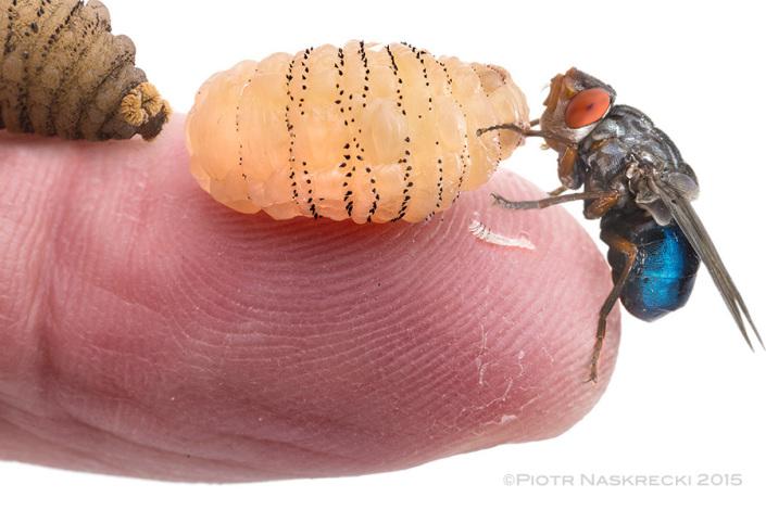 cientifico-deja-crecer-un-parasito-en-un-propio-cuerpo