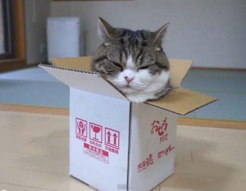 por-que-los-gatos-aman-las-cajas