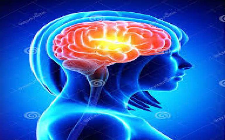 datos-del-cerebro-femenino-que-no-sabias