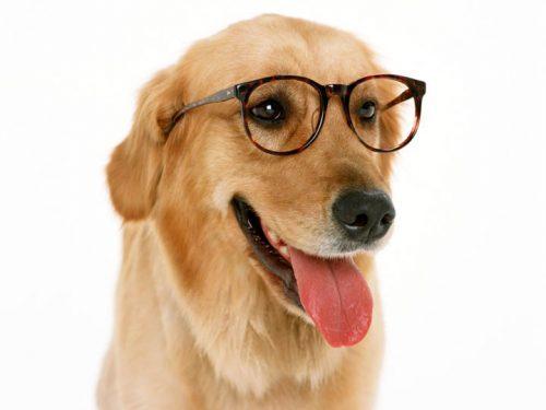 tu-perro-distingue-emociones-en-tu-cara