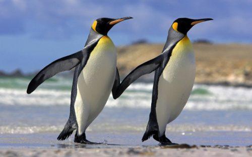 sabias-que-los-pinguinos-solo-pueden-degustar-lo-salado-y-agrio