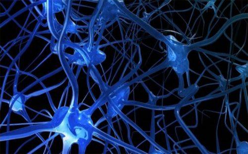 si-no-comes-tus-neuronas-se-comen-a-si-mismas
