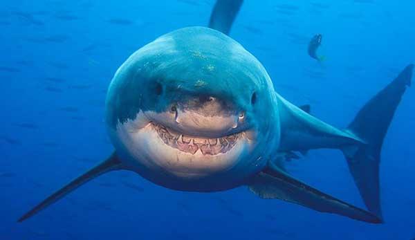 por-que-los-tiburones-odian-el-agua-dulce