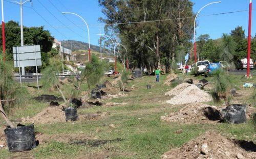 van-a-plantar-en-nayarit-mas-de-3-millones-de-arboles