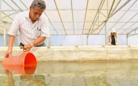 31-de-marzo-fecha-limite-para-solicitar-apoyos-agropecuarios-y-pesqueros