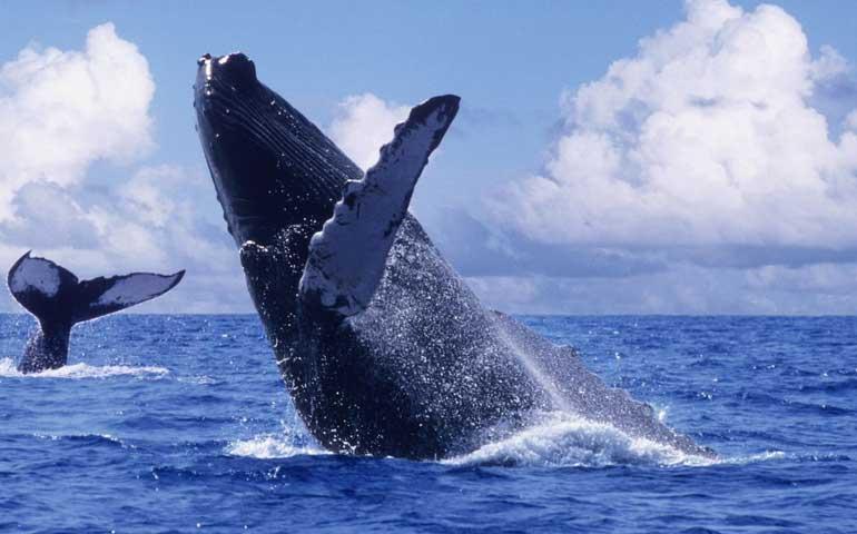 esta-por-terminar-temporada-de-avistamiento-de-ballenas