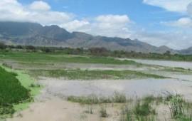 mal-clima-deja-danos-de-600-hectareas-de-maiz-en-sinaloa