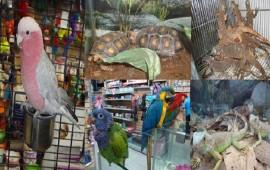 maskota-dejara-de-vender-201-especies-protegidas-profepa