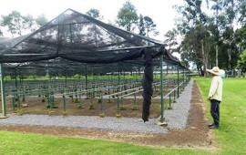 se-producira-un-millon-de-plantas-para-reforestacion-social-cofonay