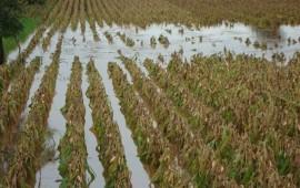 todo-el-apoyo-a-campesinos-afectados-por-las-lluvias-senalo-espinoza-vargas