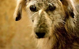 al-mes-sacrifican-mas-de-5-mil-perros-en-saltillo