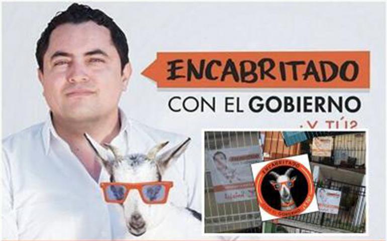 candidato-a-diputado-se-promociona-con-una-cabra