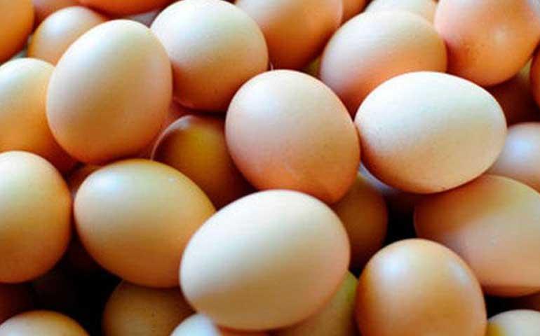 comienza-a-bajar-el-precio-del-huevo