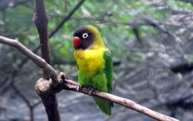 decomisan-112-aves-exoticas-a-granja-en-aguascalientes