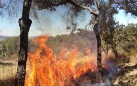 disminuyen-incendios-forestales-durante-el-2015-en-nayarit