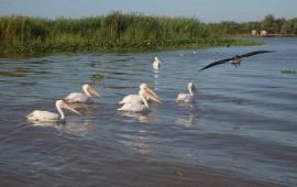 el-birding-potencializa-el-ecoturismo-de-riviera-nayarit