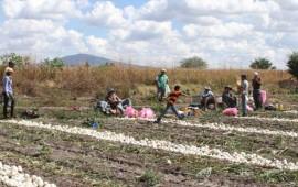 mas-de-2-millones-de-jornaleros-agricolas-en-semiesclavitud