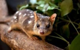 en-australia-se-ha-propuesto-un-plan-para-permitir-la-tenencia-de-animales-nativos-como-mascotas