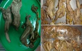 decomisan-comida-preparada-con-iguana-negra