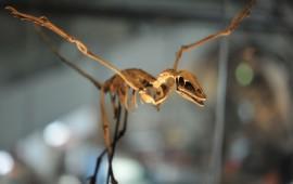 encuentran-el-esqueleto-completo-de-un-mini-dinosaurio-en-corea-del-sur