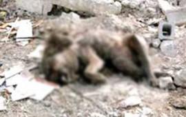 encuentran-cuerpo-de-oso-negro-en-basurero-de-coahuila