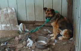 es-letra-muerta-municipios-de-nayarit-no-aplican-ley-de-proteccion-a-animales
