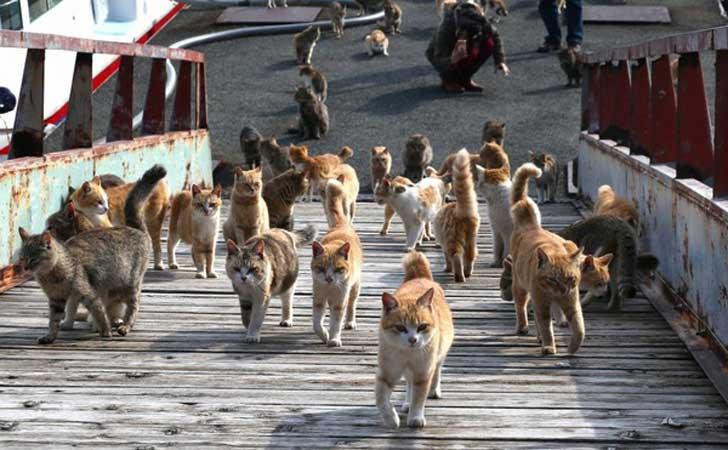 conoce-por-que-esta-increible-isla-japonesa-es-llamada-el-paraiso-de-los-gatos