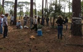 huajicori-se-une-a-la-colecta-de-semilla-forestal-de-calidad