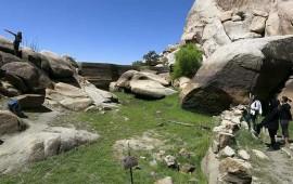 intensa-sequia-en-california-ha-matado-mas-de-12-millones-de-arboles