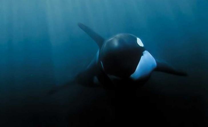 la-ballena-mas-solitaria-del-mundo