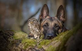 conoce-la-inusual-amistad-entre-un-buho-y-un-perro