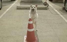 hizo-una-buena-accion-por-un-perro-y-este-le-agradecio-reuniendolo-con-el-amor-de-su-vida