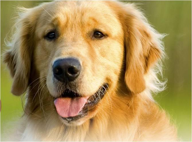 unos-padres-le-presentan-su-hijo-casi-sin-vida-a-un-perro-luego-algo-milagroso-sucede