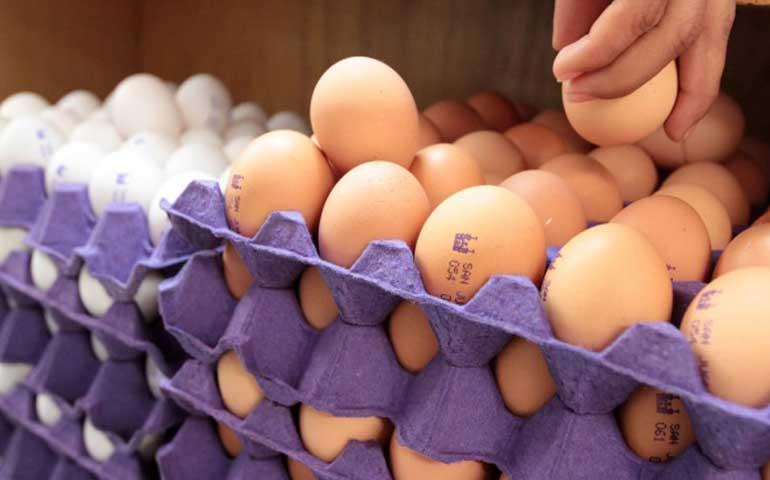 precio-de-huevo-baja-tras-anuncio-de-investigacion