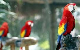 roban-aves-exoticas-del-cocodrilario-de-san-blas