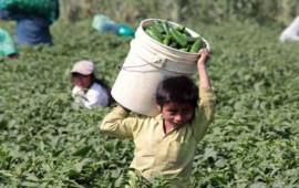 acuerdos-con-los-padres-permiten-combatir-el-trabajo-infantil-en-nayarit