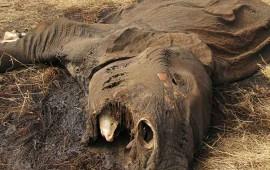 alarma-en-tanzania-por-declive-de-elefantes-pierde-mas-de-60-mil-en-5-anos