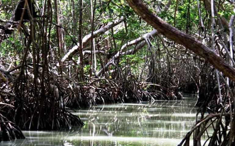 autoridades-estatales-buscan-criar-mangle