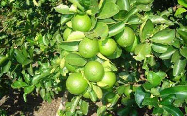 avanza-la-reconversion-de-cultivos-en-nayarit