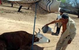 azota-sequia-a-ganaderos-de-tecuala