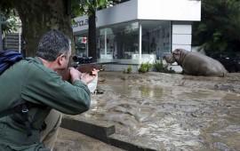 caos-en-georgia-por-diluvio-11-muertos-y-mas-30-animales-escapan-del-zoologico